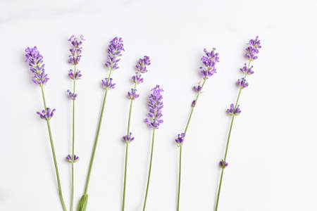 violet lavender flowers arranged on marble background. top view, flat lay.