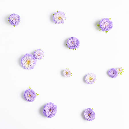 small purple aster flowers on a white background. floral pattern, square frame.