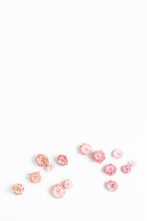 minimalistic floral composition on a white background. fresh asters flower toned a gradient orange - pink, flat lay.