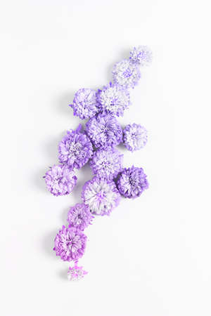 minimalistic floral arrangement on a white background. fresh asters flower toned a gradient purple - pink, flat lay. 스톡 콘텐츠