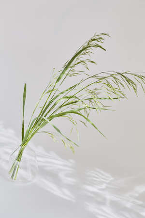 summer concept. wildflowers, grasses on a light background in blurry focus. mood aesthetics, copy space. Banque d'images