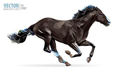 Cavallo al galoppo. Cavallo arabo Ritratto in piedi contro isolat