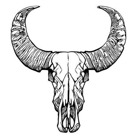 Buffalo skull- hand drawn vector illustration, isolated on white. Vector illustration.