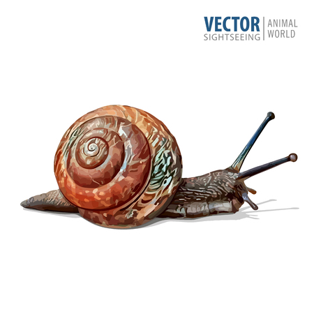 Illustration of realistic. Garden snail. Vector isolated on white background. Stock Illustratie