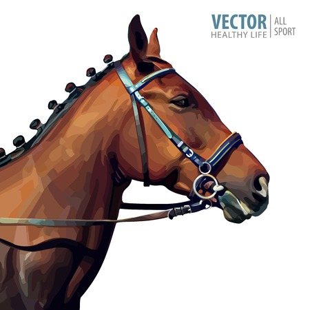 Portrait of a thoroughbred chestnut stallion. Horses head. Champion. Sport. Isolated on a white background. Vector illustration.