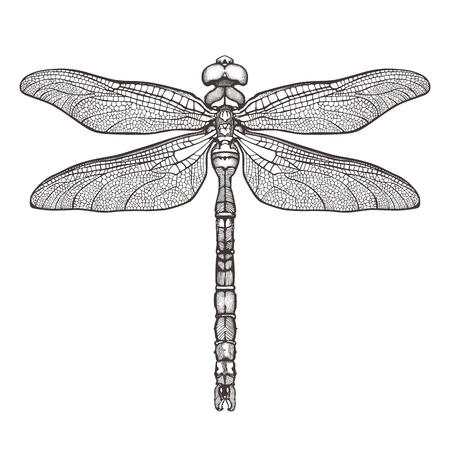 Black dragonfly Aeschna Viridls, isolated on white background. Dragonfly tattoo sketch. Coloring books. Hand-drawn vector illustration.