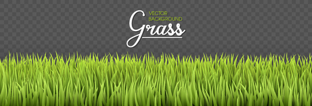 Summer background. Green grass borders. Texture High green fresh grass isolated on transparent background. Vector illustration nature background. 免版税图像