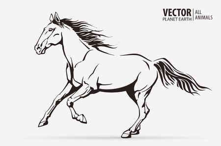 Silhouette of a running horse. Galloping animal. Logo. Champion. Sport. Isolated on a background. Vector illustration