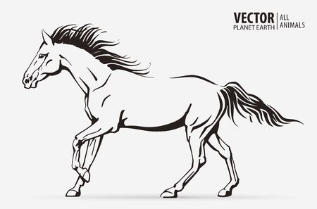 Silhouette of a running horse. Galloping animal. Logo. Champion. Sport. Isolated on a background. Vector illustration Logo