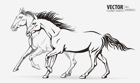 Beautiful arabian horses. Silhouettes of a running horses. Galloping animal. Sport. Vector illustration