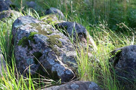 Granite. Rocks with moss. Forest. Large stones on green grass. Moss on a rock face. Relief and texture of stone with patterns. Stone natural background. Northern nature, summer, autumn. Stok Fotoğraf