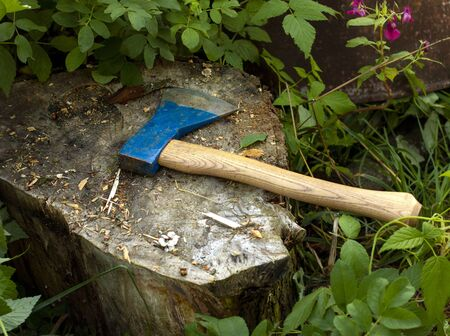 The old axe and chopping block for chopping wood with axe. The cutting of trees in wood with sharp ax, close up axe, wood chips fly. Bushes, grass, summer. Natural background