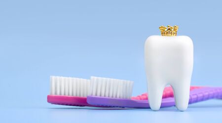 Dental model and toothbrush on blue background, concept image of dental background. Crown. Dental hygiene. Banner with copyspace 스톡 콘텐츠
