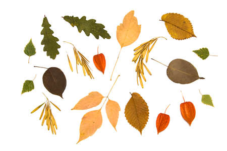 Collection of dried plants for design. Set autumn leaves and seeds isolated on white background, topview, flatlay.