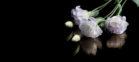 White flowers on black glassy background, flowers reflection. Sadness concept. Copy space for text. Selective focus