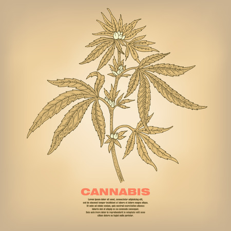 narcotics: Cannabis. Illustration of medical herbs. Isolated image on white background. Vector.