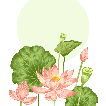 ベクトル。アート水彩鉛筆でエキゾチックな花のイラスト。蓮の池。レトロ。ビンテージ スタイルです。