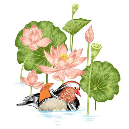 pond water: Vector. Illustration with exotic flowers in the art watercolor pencils. Lotus pond and mandarin duck. Retro. Vintage style.