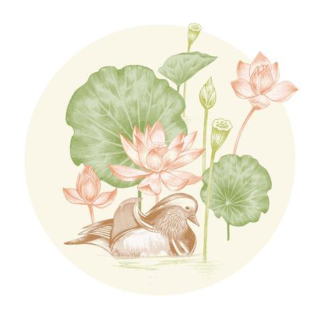 벡터. 예술 수채화 연필의 이국적인 꽃 그림. 연꽃 연못과 만다린 오리. 레트로. 빈티지 스타일.