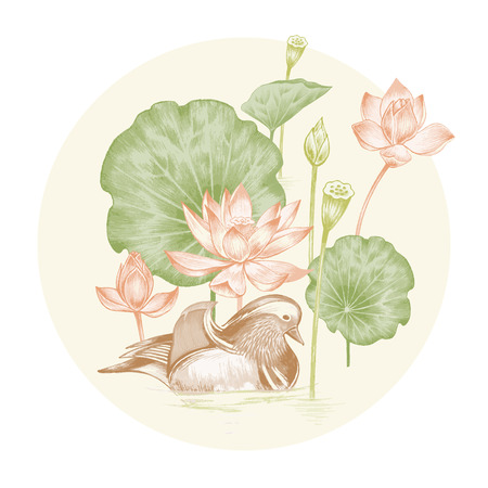 Vector. Illustration with exotic flowers in the art watercolor pencils. Lotus pond and mandarin duck. Retro. Vintage style.