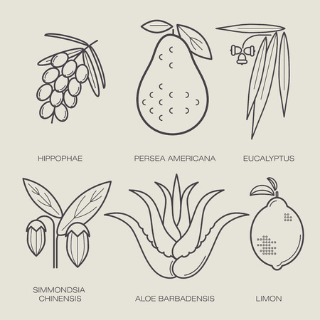 eucalyptus: Set of vector icons medical herbs and plants. The plant sea buckthorn, avocado, eucalyptus plant, jojoba, aloe plant, lemon. Healthy lifestyle concept. Design to create labels, stickers, Web