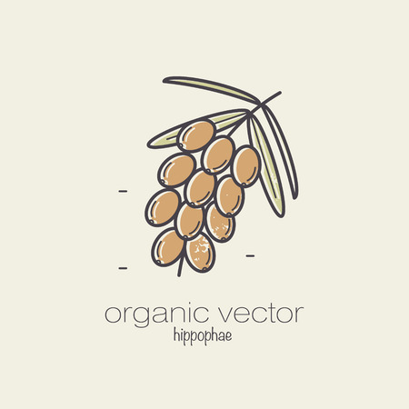 sea plant: Plant motifs. The plant sea buckthorn. Vector illustration of a plant used in cosmetics, medicine, cooking. The plant design for packaging, web, creation of goods and services. Modern style mono line.