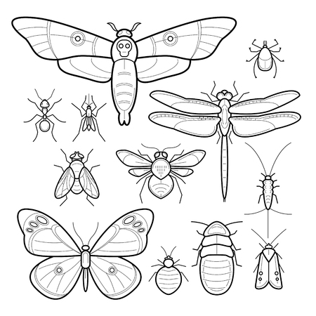 flies: Insects butterfly, moth, dragonfly, bee, fly, moths, cockroaches, bedbugs, mites, ants, mosquitoes, silverfish. Set of vector insects. Collection of insects in modern style mono line. Black and white.