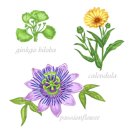 smack: Set of vector images of medicinal plants. Beauty and health. Bio additives. Ginkgo biloba, passionflower, colendula. Illustration
