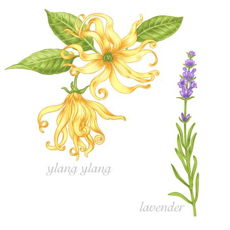 Set of vector images of medicinal plants. Beauty and health. Bio additives. Ylang ylang, lavender.