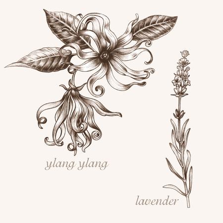 additives: Set of vector images of medicinal plants. Biological additives are. Healthy lifestyle. Ylang, lavender.