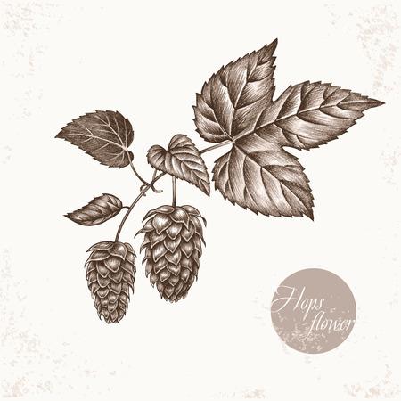 additives: Vector images of medicinal plants. Biological additives are. Healthy lifestyle. Hops flower.