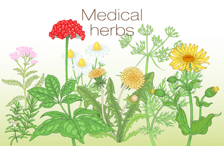 arnica: Template label, poster, page spread, design texts about alternative medicine. Vector illustration of flowers and medical herbs. Ginseng, chamomile, dandelion, arnica, yarrow, rosemary, caraway.