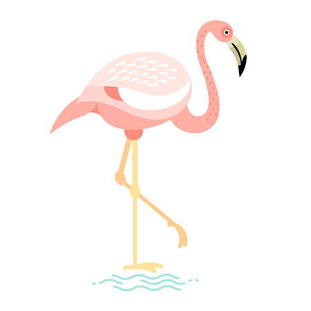 water bird: Vector image of a flat figure bird. Simplified design of bird from the wild. Graphic illustration of colored exotic bird isolated on white background. Water bird.