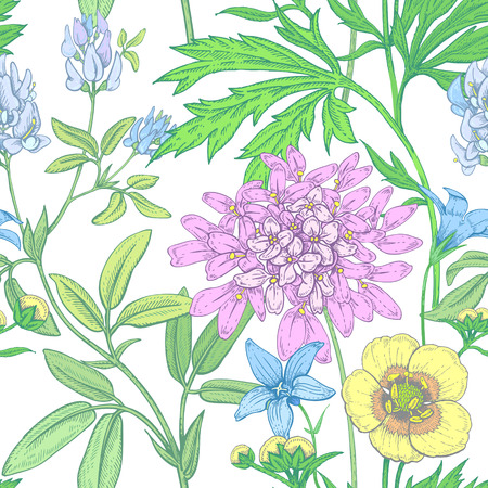 field of flowers: Illustration of wild field flowers on a white background.