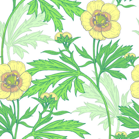 buttercups: Illustration of wild field flowers buttercups on a white background. Illustration