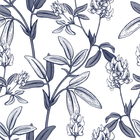 field of flowers: Illustration of wild field flowers alfalfa.