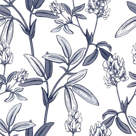 Illustration of wild field flowers alfalfa.