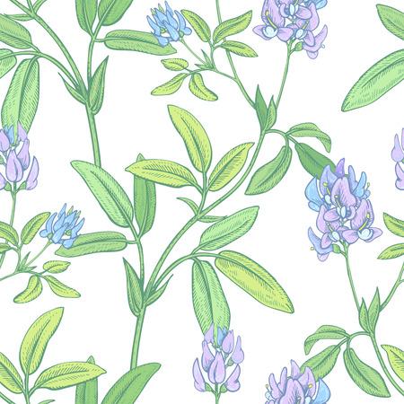 Illustration of wild field flowers alfalfa on a white background. Illustration