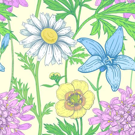 alfalfa: Illustration of wild field flowers buttercups, alfalfa, bell, chamomile on a white background. Illustration