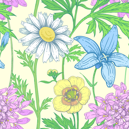 Illustration of wild field flowers buttercups, alfalfa, bell, chamomile on a white background. Illustration