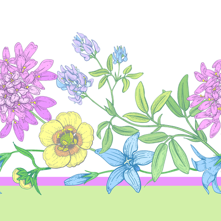 Illustration of wild field flowers buttercups, alfalfa, bell on a white background.