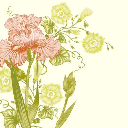 bindweed: Floral card. Roses, irises, bindweed. Wedding invitation. Vector. Retro. Victorian style.