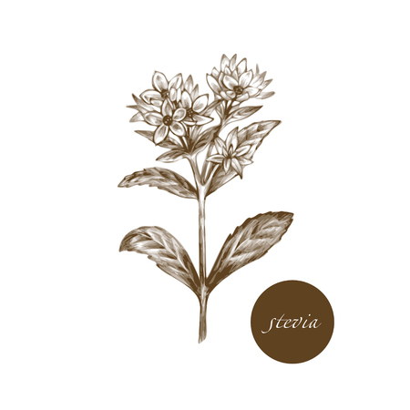 additives: Vector images of medicinal plants. Biological additives are. Healthy lifestyle. Stevia.