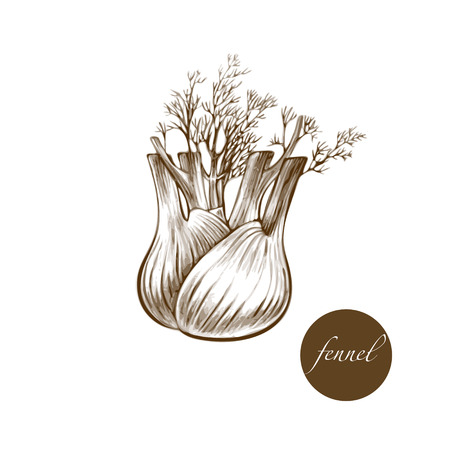 herbaceous: Vector images of medicinal plants. Biological additives are. Healthy lifestyle. Fennel. Spice.