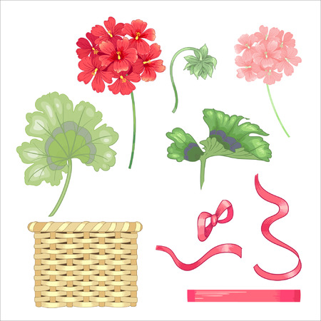 Set of flowers and geranium leaves, wicker baskets, ribbons and bows isolated on white background.