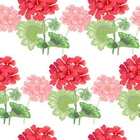 White background with geranium flowers.