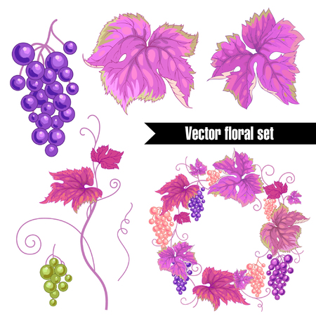 twigs: Set isolated leaves, twigs and fruits of wild grape on white background and wreath. Vector illustration for creating greeting cards, paper, packaging, textiles. Illustration