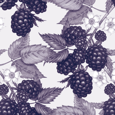 blackberry: Vector seamless background. The branches of a blackberry with berries and flowers. Design for fabrics, textiles, paper, wallpaper, web. Vintage.