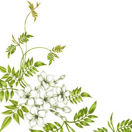 Isolierte Jasmin Blume auf einem weißen Hintergrund. Um Grußkarten, Hochzeitseinladungen, Ornamente, Muster erstellen. Vektor.