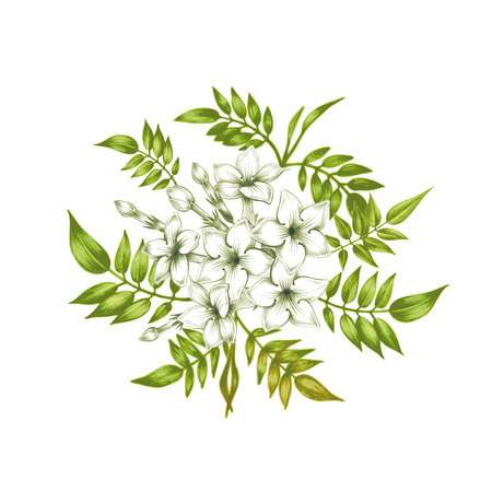 flores de jazmín aislados en un fondo blanco. Para crear tarjetas de felicitación, invitaciones de boda, adornos, patrones. Vector. Ilustración de vector